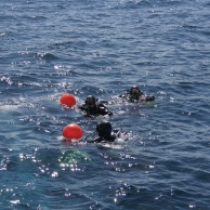 Divers descending with ashes